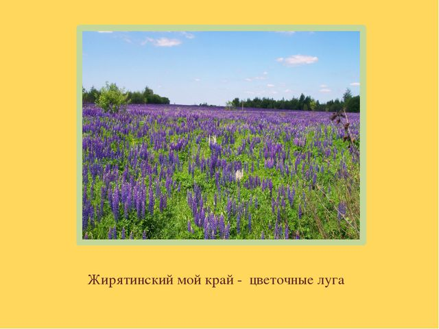Жирятинский мой край - цветочные луга