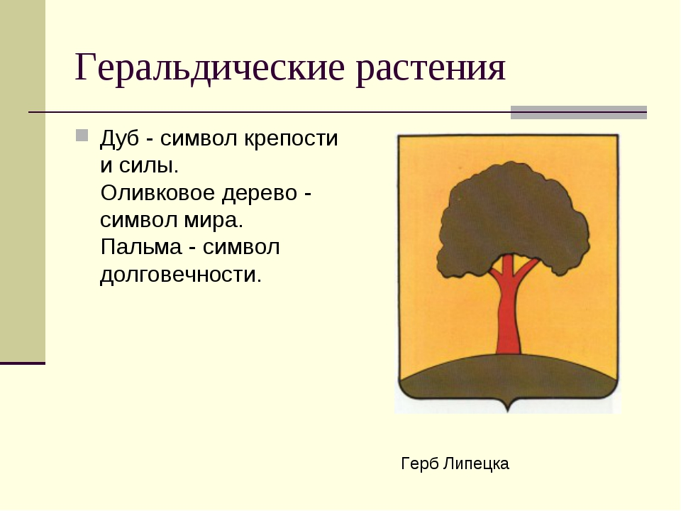 Геральдические растения Дуб - символ крепости и силы. Оливковое дерево - сим...