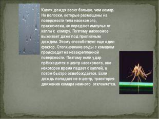 Капля дождя весит больше, чем комар. Но волоски, которые размещены на поверхн