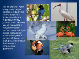 Так же странен здесь и мир птиц: рядом с глухарем и филином можно встретить я