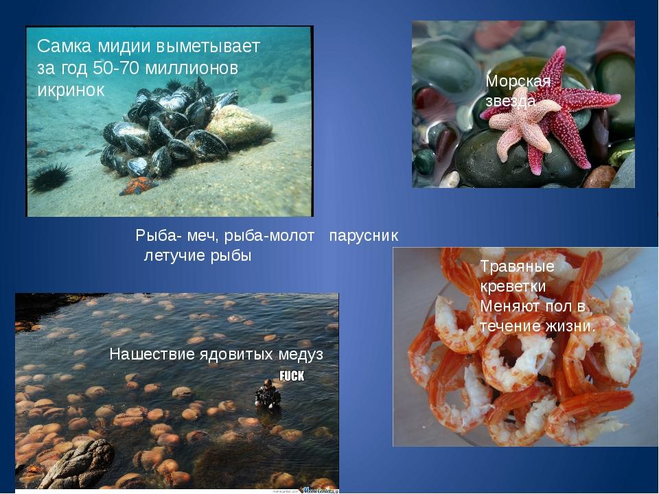 Самка мидии выметывает за год 50-70 миллионов икринок Морская звезда Травяные...