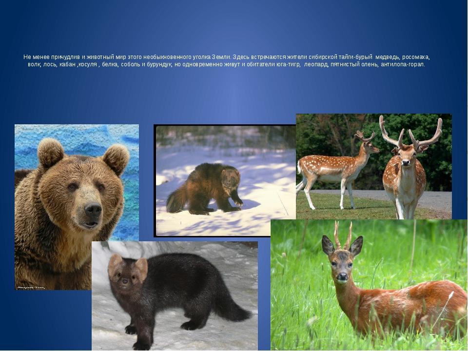 Не менее причудлив и животный мир этого необыкновенного уголка Земли. Здесь в...