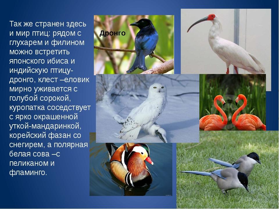Так же странен здесь и мир птиц: рядом с глухарем и филином можно встретить я...