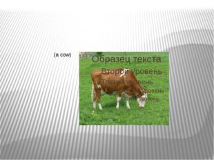 (a cow)