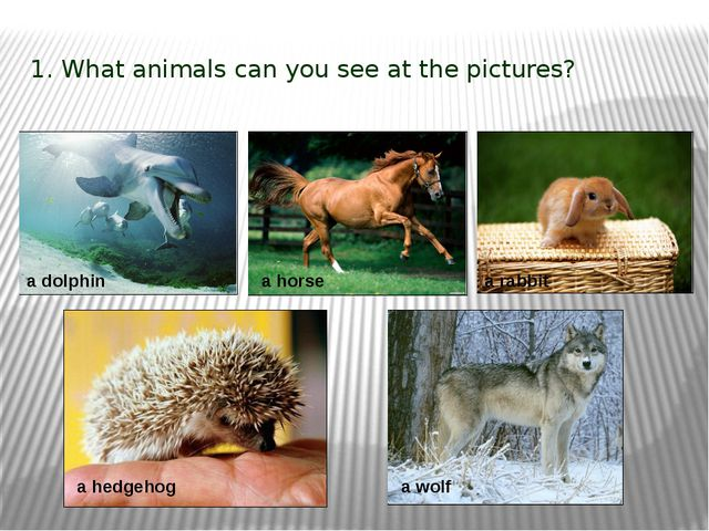 1. What animals can you see at the pictures? a dolphin a hedgehog a rabbit a...
