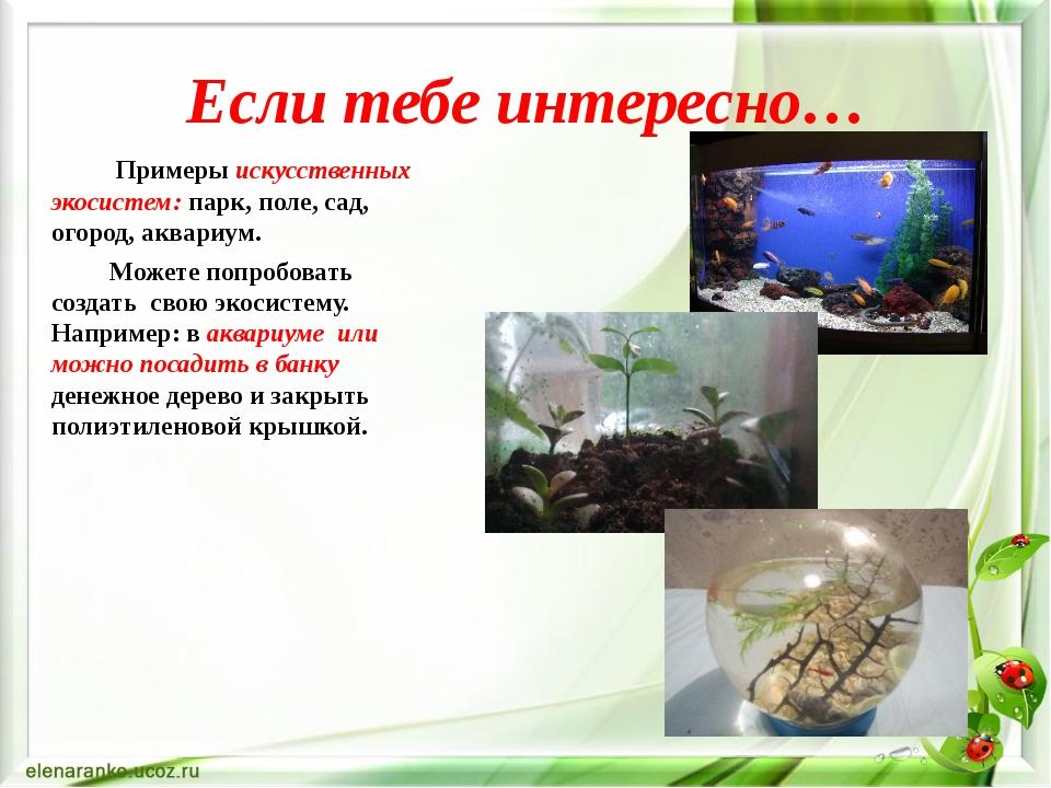 Если тебе интересно… Примеры искусственных экосистем: парк, поле, сад, огород...