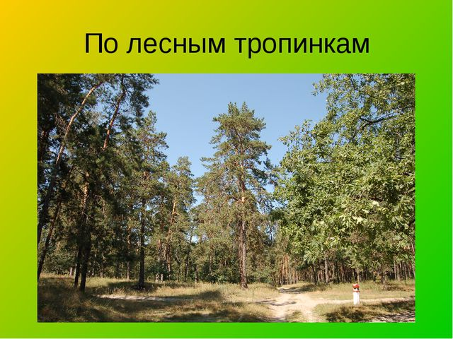 По лесным тропинкам