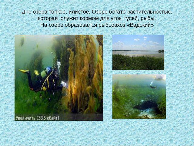 Дно озера топкое, илистое. Озеро богато растительностью, которая служит кормо...