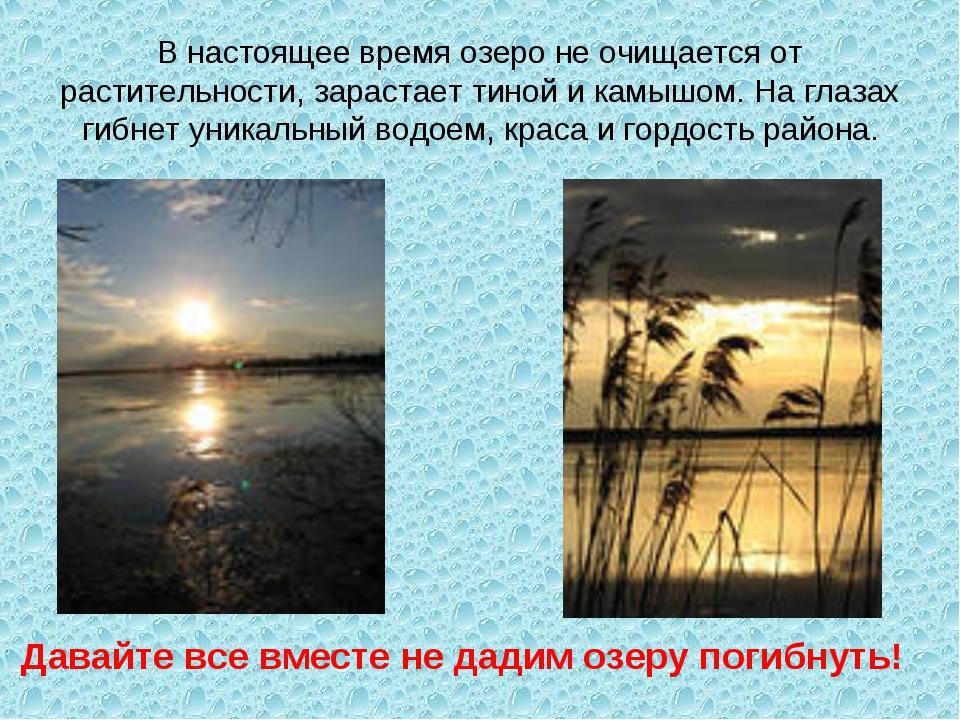 В настоящее время озеро не очищается от растительности, зарастает тиной и кам...