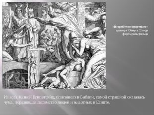 Из всех Казней Египетских, описанных в Библии, самой страшной оказалась чума,