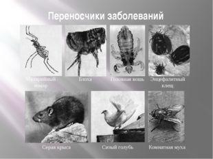 Переносчики заболеваний Малярийный комар Блоха Головная вошь Энцефалитный кле