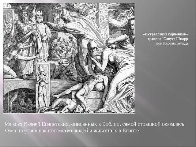 Из всех Казней Египетских, описанных в Библии, самой страшной оказалась чума,...