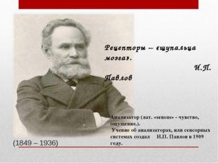 (1849 – 1936) Рецепторы – «щупальца мозга». И.П. Павлов Анализатор (лат. «se