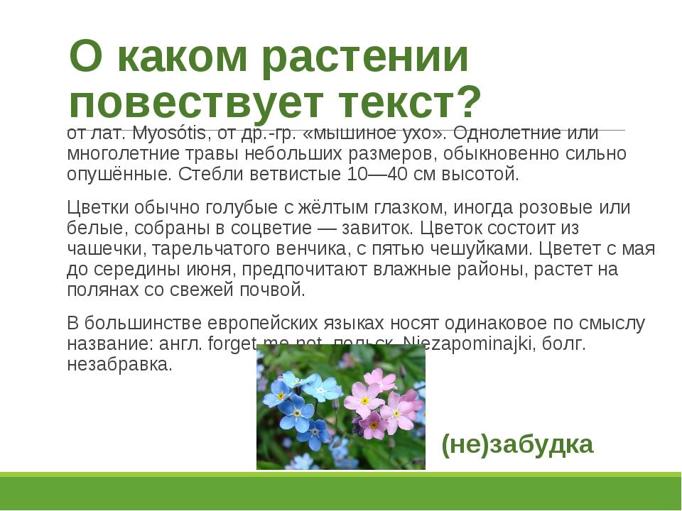 О каком растении повествует текст? от лат. Myosótis, от др.-гр. «мышиное ухо»...