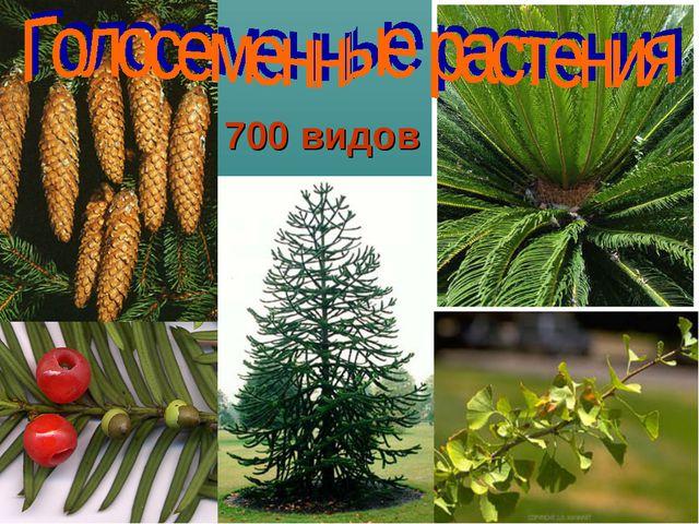 700 видов