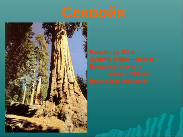 Секвойя Высота - до 100 м Диаметр ствола – до50 м Продолжительность жизни –...