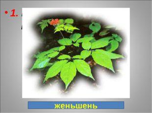 1. Ценнейшее лекарственное растение, в переводе с китайского языка: «Человек