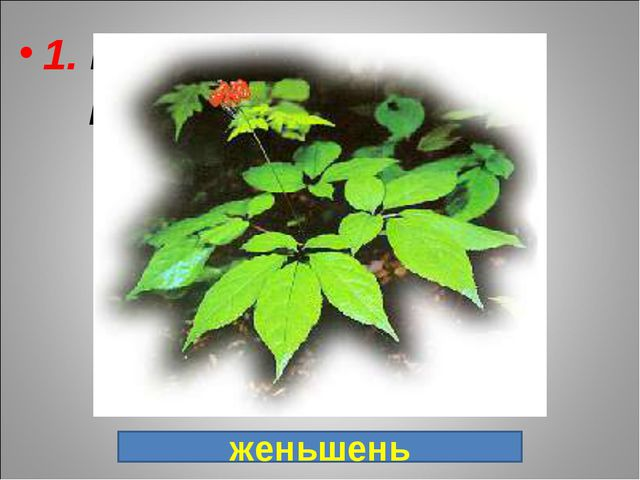 1. Ценнейшее лекарственное растение, в переводе с китайского языка: «Человек...