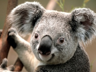 C:\Users\Public\Pictures\Sample Pictures\Koala.jpg