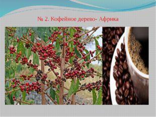 № 2. Кофейное дерево- Африка