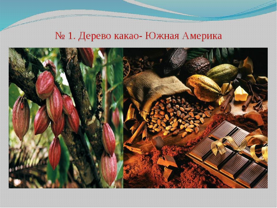 № 1. Дерево какао- Южная Америка