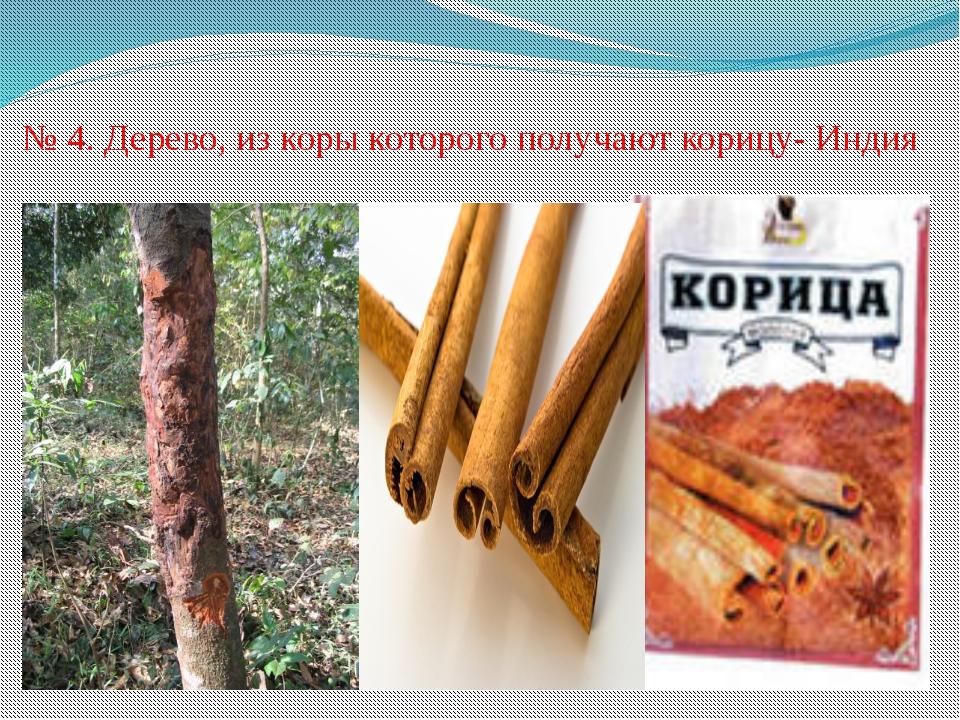 № 4. Дерево, из коры которого получают корицу- Индия