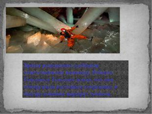 Братья немедленно сообщили ответственному инженеру, Роберто Гонсалесу. Гонсал