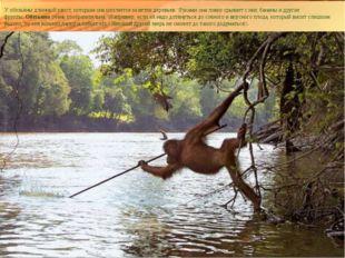 У обезьяны длинный хвост, которым она цепляется за ветки деревьев. \Руками он