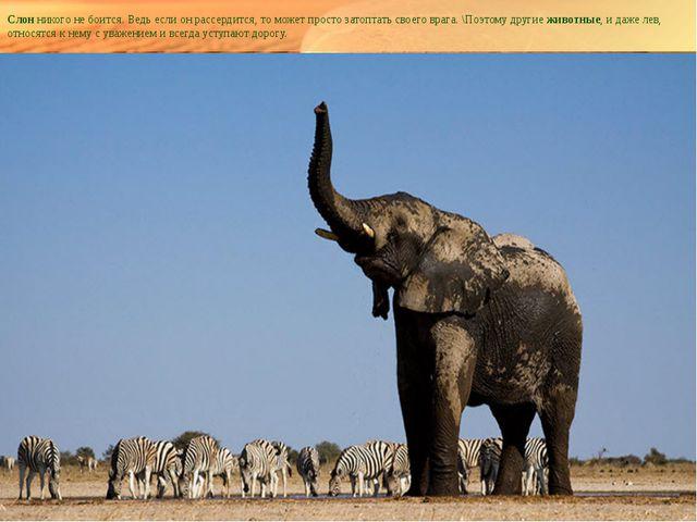 Слонникого не боится. Ведь если он рассердится, то может просто затоптать св...