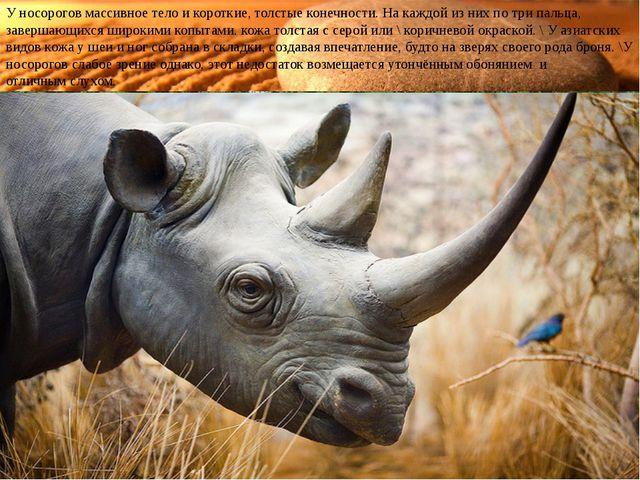 У носорогов массивное тело и короткие, толстые конечности. На каждой из них п...