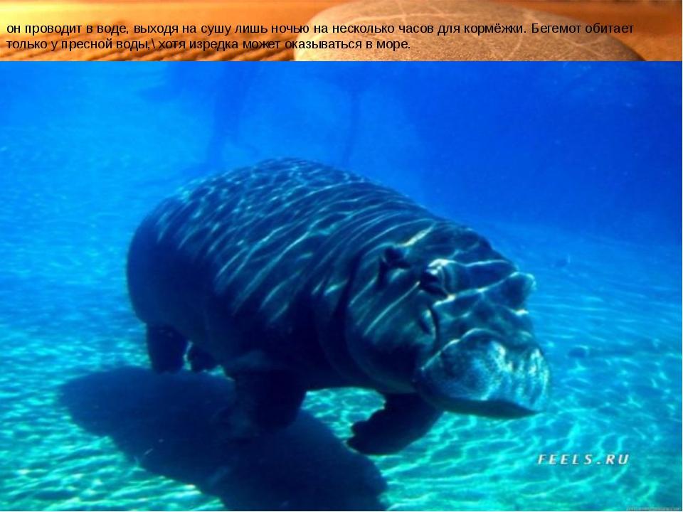Характерной особенностью бегемота является его полуводный образ жизни— бо́ль...