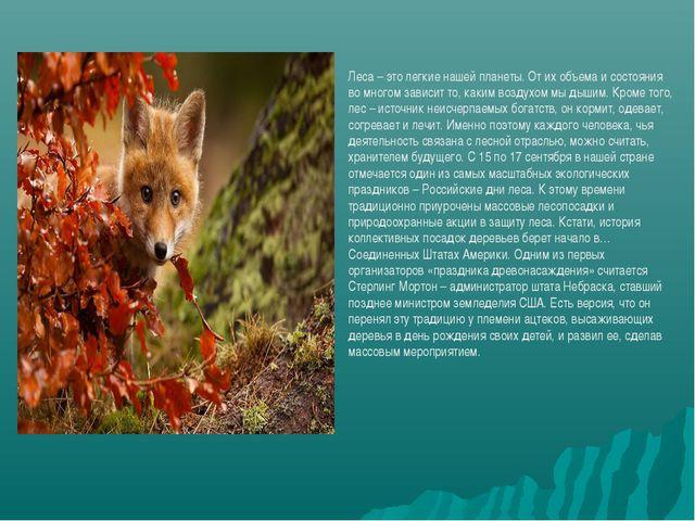 Леса – это легкие нашей планеты. От их объема и состояния во многом зависит т...