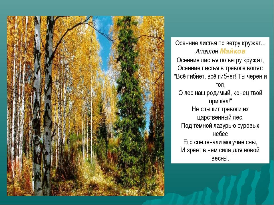 Осенние листья по ветру кружат... АполлонМайков Осенние листья по ветру круж...