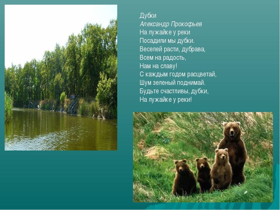 Дубки Александр Прокофьев На лужайке у реки Посадили мы дубки. Веселей расти,...