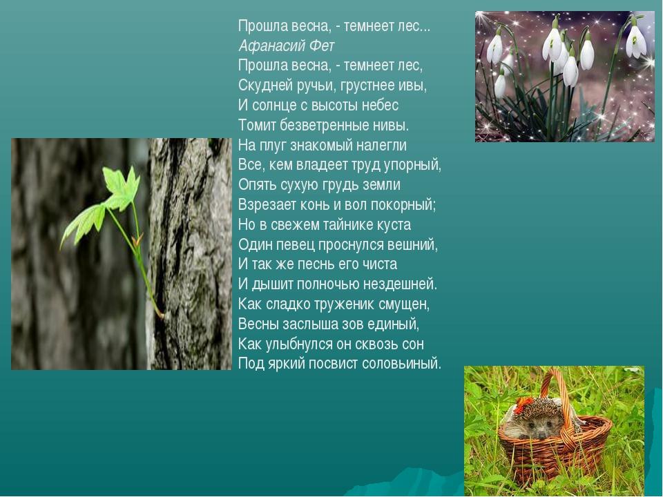 Прошла весна, - темнеет лес... Афанасий Фет Прошла весна, - темнеет лес, Скуд...