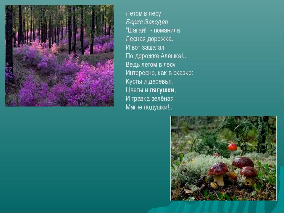 """Летом в лесу Борис Заходер """"Шагай!"""" - поманила Лесная дорожка. И вот зашагал..."""