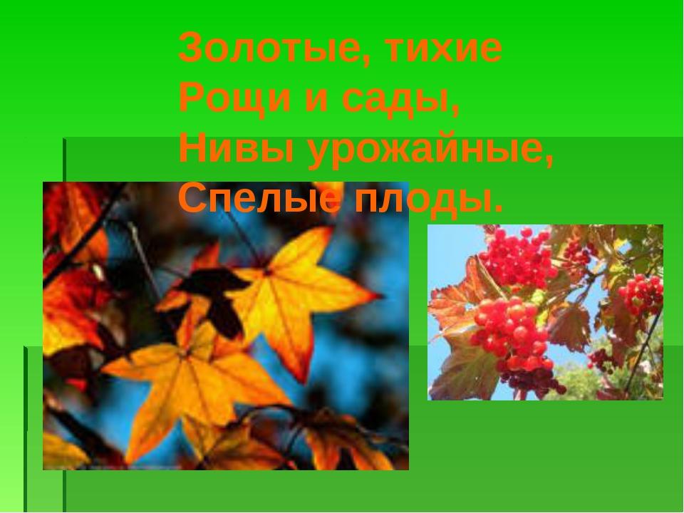Золотые, тихие Рощи и сады, Нивы урожайные, Спелые плоды.