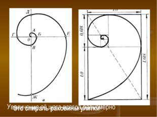 Это спираль раковины улитки. Увеличение её шага всегда равномерно