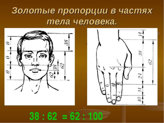 Золотые пропорции в частях тела человека. 38 : 62 = 62 : 100