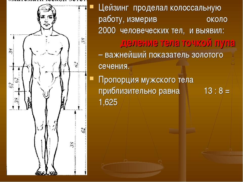 Цейзинг проделал колоссальную работу, измерив около 2000 человеческих тел, и...