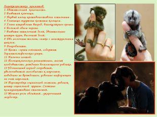 Характеристика приматов. 1 Хватательная конечность. 2 Развитая ключица. 3 Пер