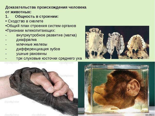 Доказательства происхождения человека от животных: 1.Общность в строени...