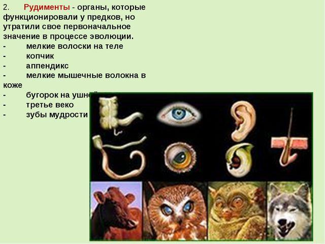 2.Рудименты- органы, которые функционировали у предков, но утратили св...