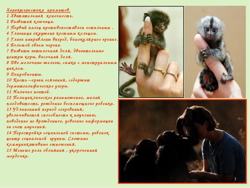 Характеристика приматов. 1 Хватательная конечность. 2 Развитая ключица. 3 Пер...