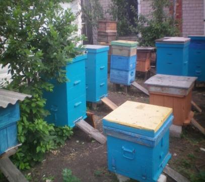E:\яна пчелы\100_0157.JPG