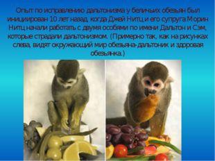 Опыт по исправлению дальтонизма у беличьих обезьян был инициирован 10 лет на