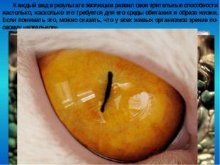 Каждый вид в результате эволюции развил свои зрительные способности настолько