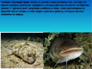 Человек под водой видит плохо, а у рыбы глаза устроены так, что она, не меняя