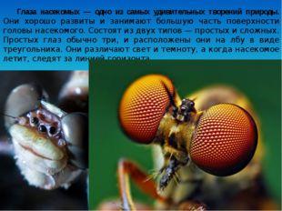 Глаза насекомых — одно из самых удивительных творений природы. Они хорошо раз
