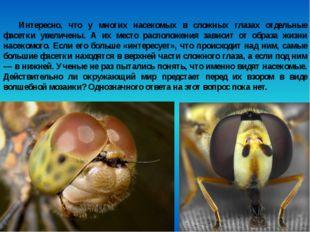 Интересно, что у многих насекомых в сложных глазах отдельные фасетки увеличен